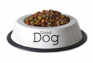 מזון יבש לכלבים