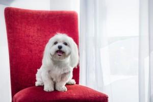 איך לגרום לכלב להפסיק להרוס את הרהיטים