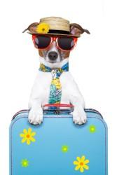 טיפול בכלב בזמן חופשה