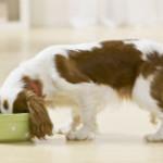 רצפת פרקט בבית עם בעלי חיים
