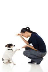 בייביסיטר לכלב