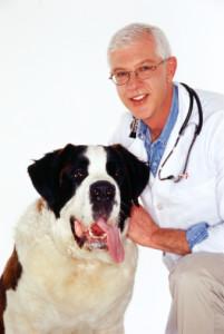 בליעת עצם זר או התפרצות של מחלה - סיבות אפשריות לשיעול כלבים