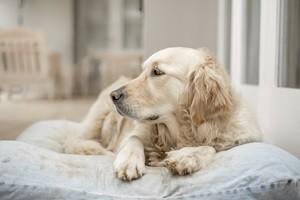 שמיכות פוך לכלבים